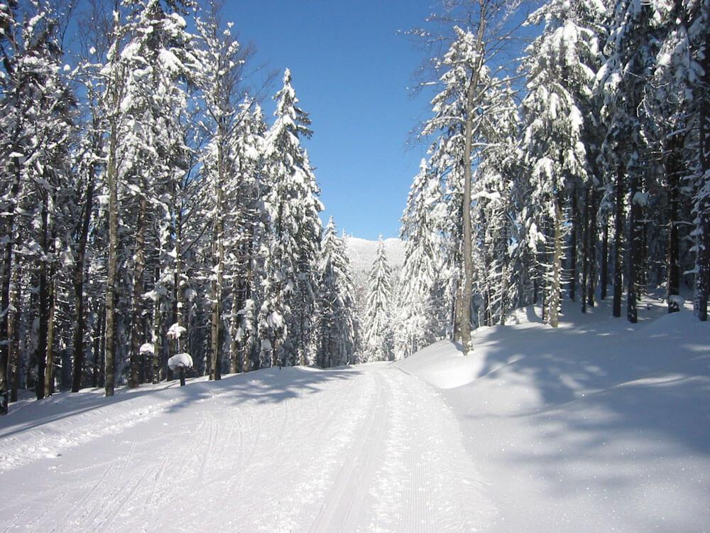 Langlauf Ski Alpin Rodeln Ferienwohnungen Hittenpichl